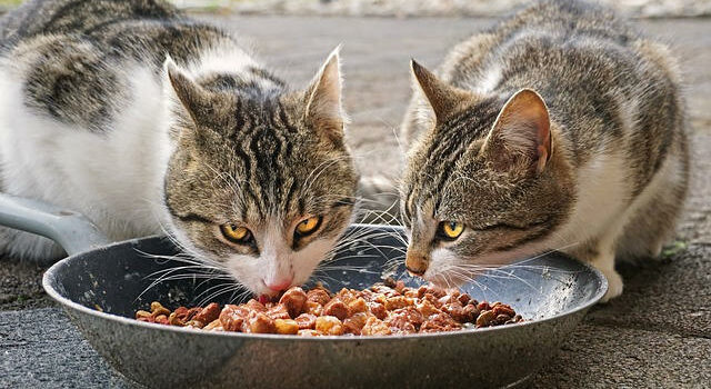 eBook Katzenernährung – Die Grundlagen einer gesunden Katzenernährung