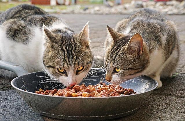 eBook Katzenernährung